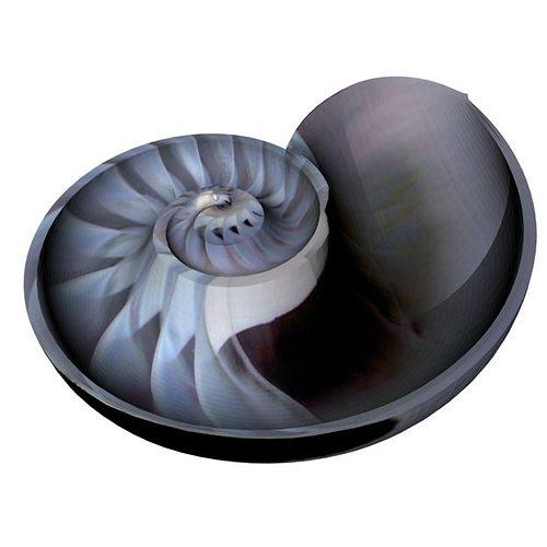 spiral nautilus shell 3d model obj mtl 1