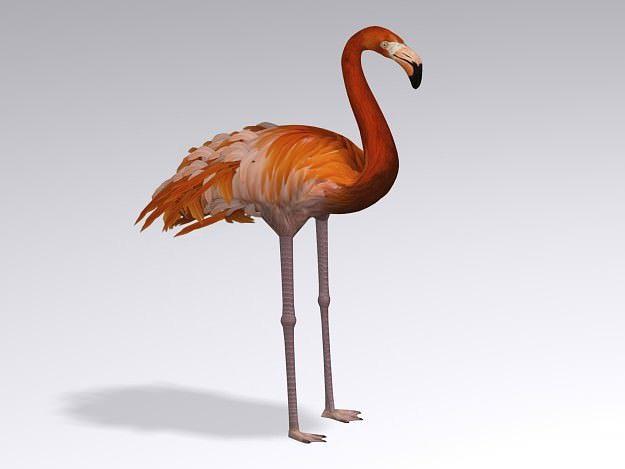 flamingo 3d model max 3ds c4d 1