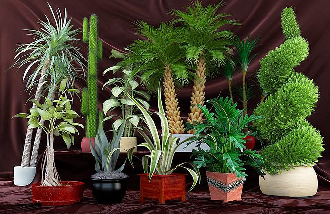 realistic plants collection 3d model max obj fbx c4d mxs 1