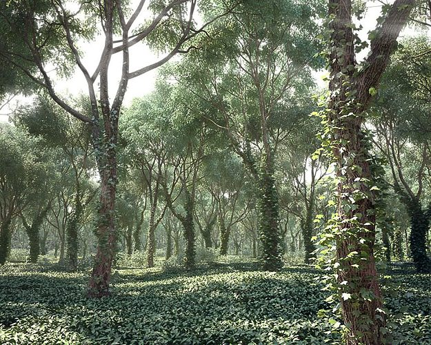 realistic tree collection 3d model max c4d 1