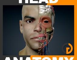 human male head anatomy 3d model max obj 3ds fbx c4d lwo lw lws