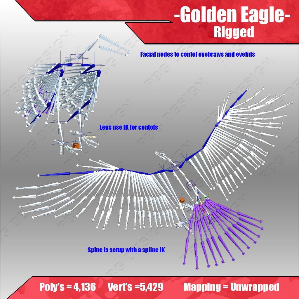3d Model Golden Eagle Cgtrader Bald Diagram Related Keywords Suggestions Max Obj Mtl 3ds Fbx Tga 7