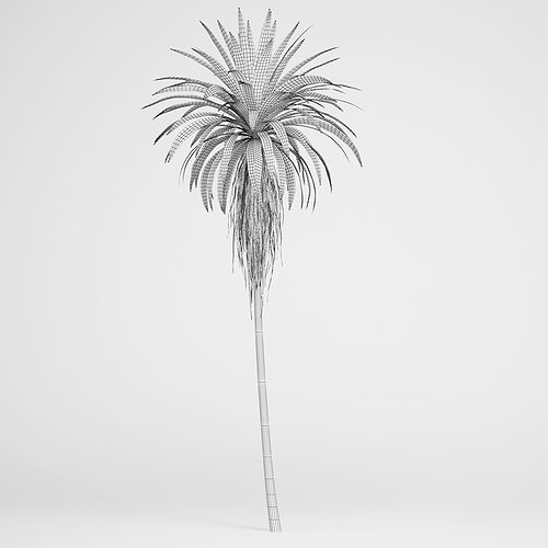 mountain cabbage tree 3d model max obj mtl fbx c4d 1