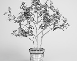 Potted Plant 08 3D
