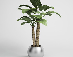 3D model Potted Houseplant 15