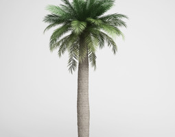 3D Chilean Wine Palm