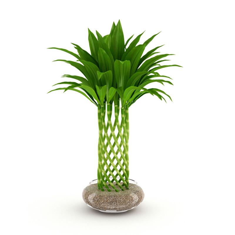 3d Fbx Bamboo Plant Cgtrader