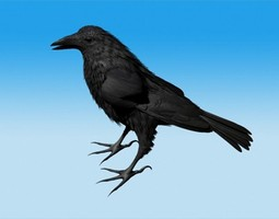 Crow Standing Model not rigged