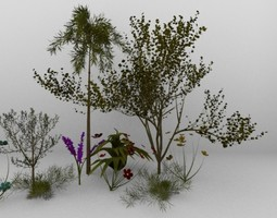 3D tropical plants