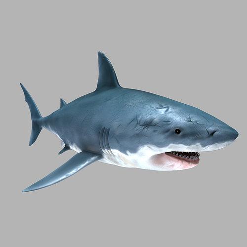 great white shark 3d model max obj mtl fbx 1
