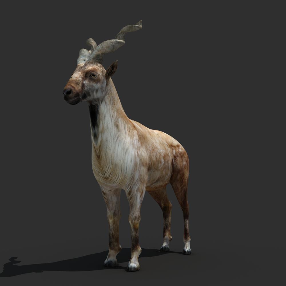 3ds max 2010 v ray 2 40 03 file formats fbx obj dog beds - Mountains Goat 3d Model Max Obj Fbx 1