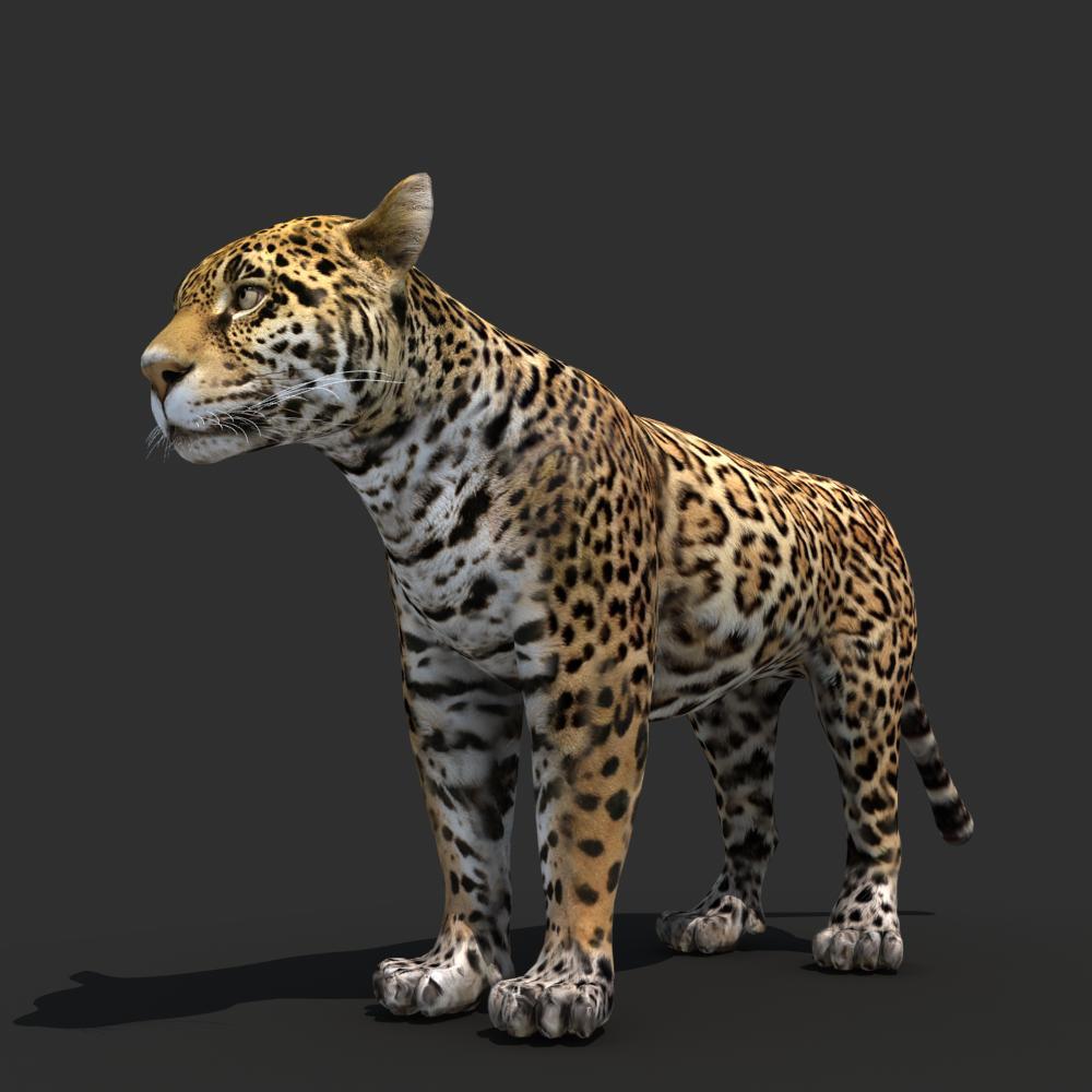 Jaguar 3D Model MAX OBJ FBX MA MB