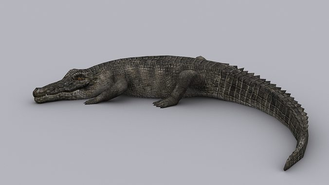 crocodile game ready animated model 3d model low-poly max 1