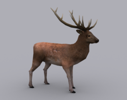 3D asset STAG GAME READY ANIMATED MODEL