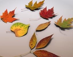 Autumn Leaves 3D model
