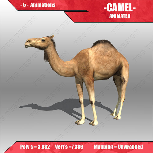 camel animated 3d model low-poly rigged animated max fbx 1