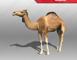 Camel Animated 3D Model