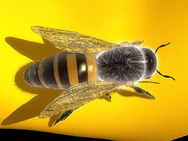 honey bee 3d model max obj 3ds fbx stl mtl 1