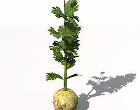 XfrogPlants Celery 3D model
