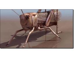 3D Grasshopper Studio Max