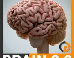 anatomy - brain 2 0 3d model max obj 3ds fbx c4d lwo lw lws