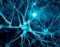 Neurons-fly-through 3D Model