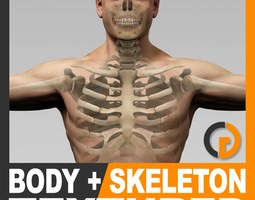 human male body and skeleton textured - anatomy 3d model max obj 3ds fbx c4d lwo lw lws