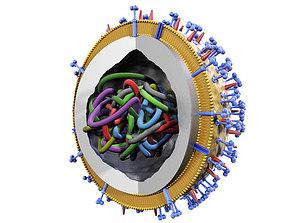 Influenza virus 3D