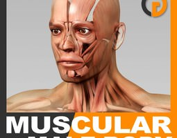 human male body and muscular system - anatomy 3d model max obj 3ds fbx c4d lwo lw lws