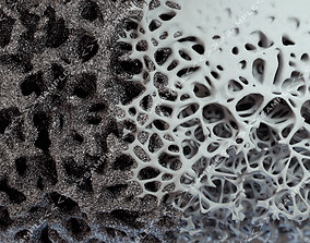 Bone structure and nanomaterial 3D model