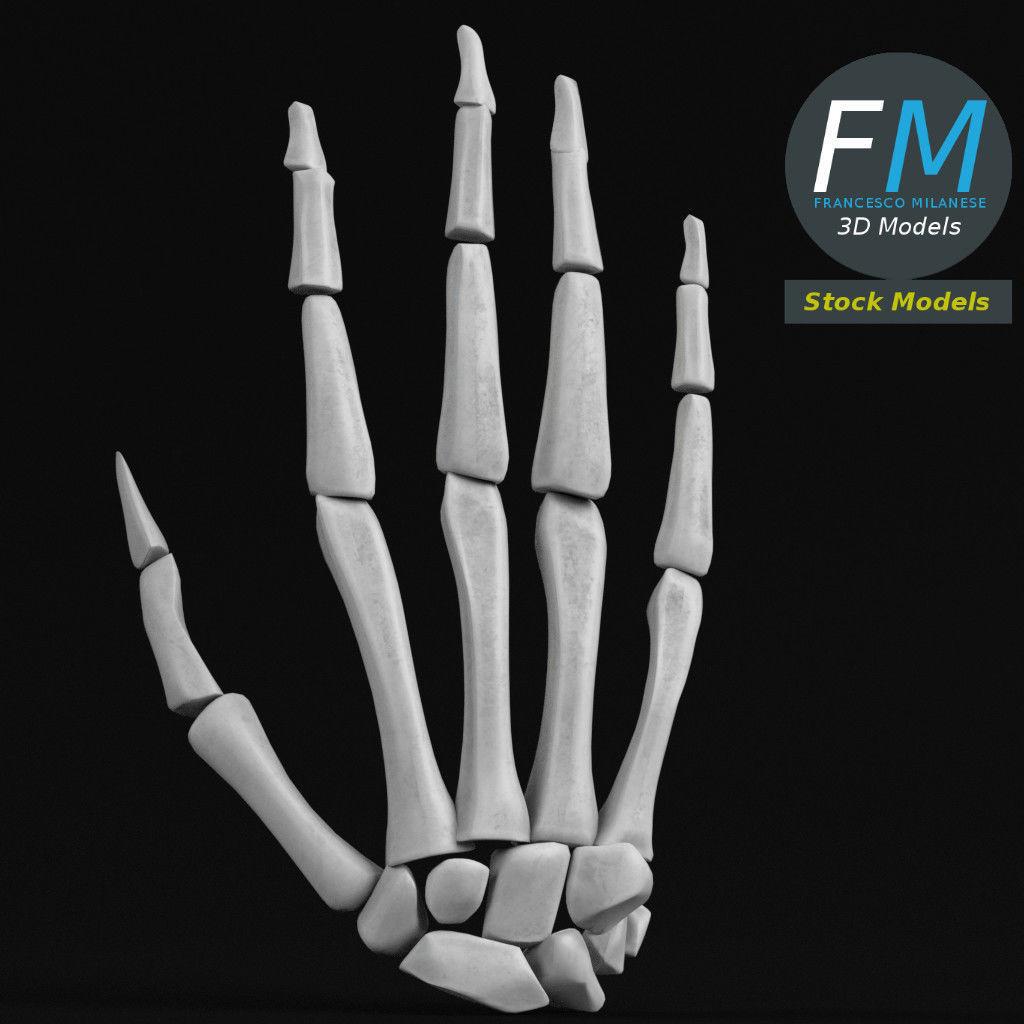 Anatomy - Human hand bones