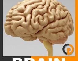 brain - anatomy 3d model max obj 3ds fbx c4d lwo lw lws