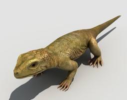lizard 3d rigged