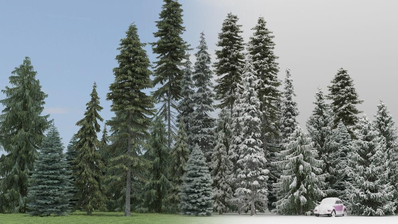 Summer Winter Fir Trees
