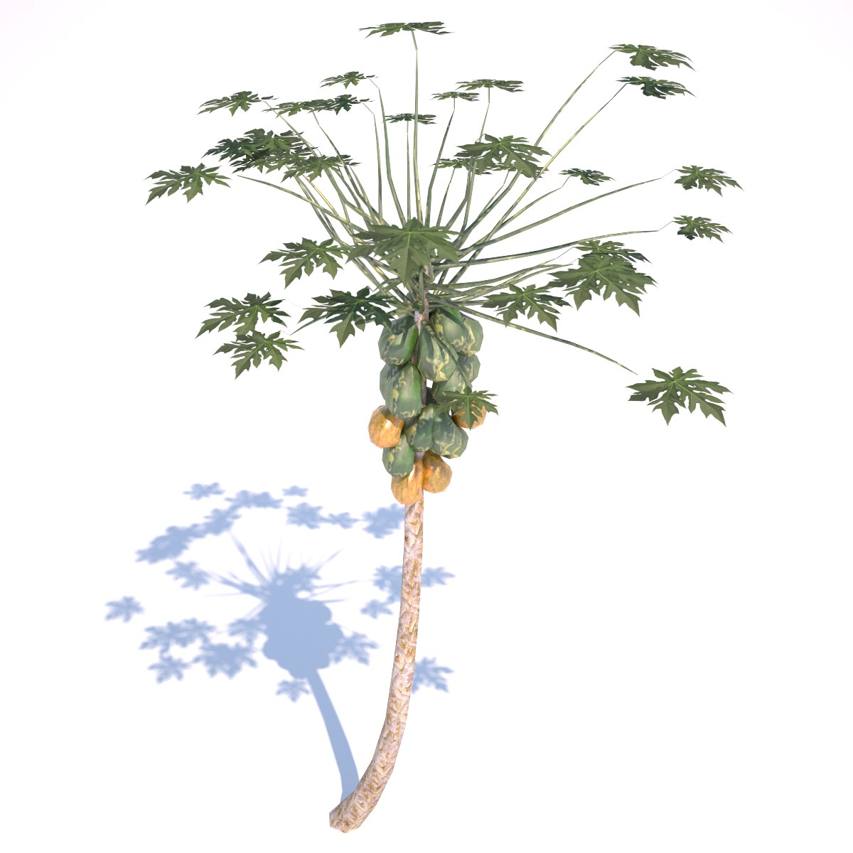 3D Asset Papaya Tree