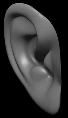 human ear 3d model obj mtl 1