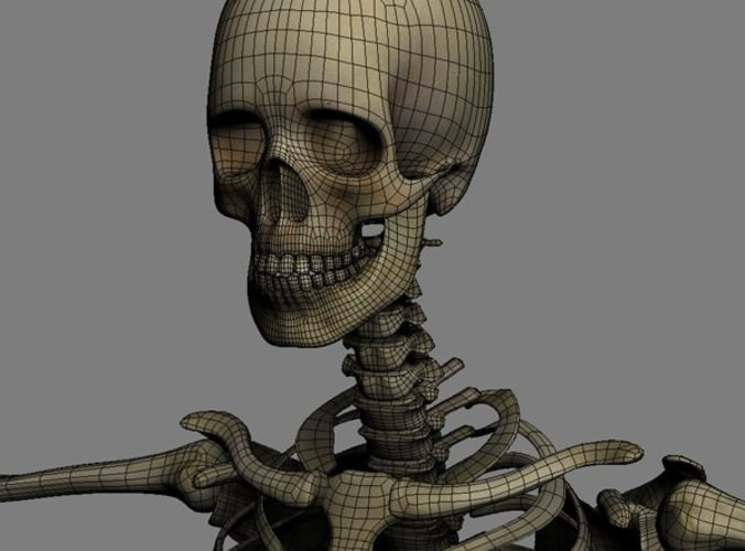 C4d Rigged Character