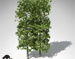 xfrogplants european hornbeam hedges 3d
