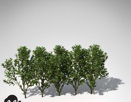 3d model xfrogplants cherry laurel