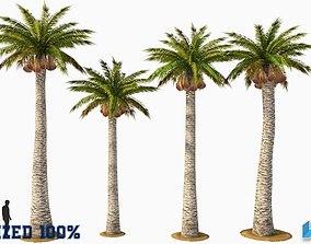 3D asset Palm Washingtonia Trees