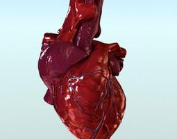 Heart Anatomy 3D Model