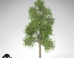 xfrogplants ginkgo 3d model