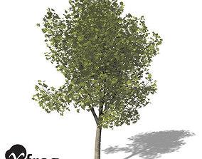 3D model XfrogPlants Ohio Buckeye