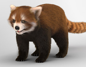3D model Red Lesser Panda