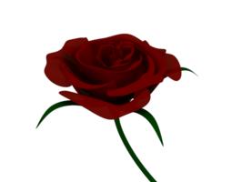 3d model red rose