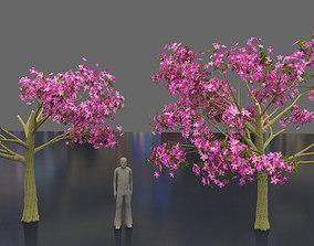 3D Silk floss tree - chorisia speciosa