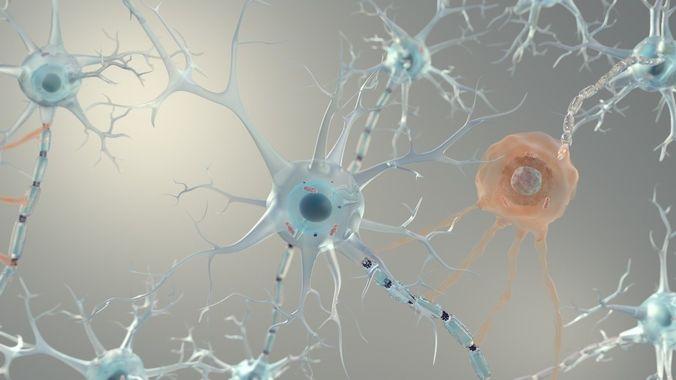 brain neurons for cinema 4d  3d model c4d 1