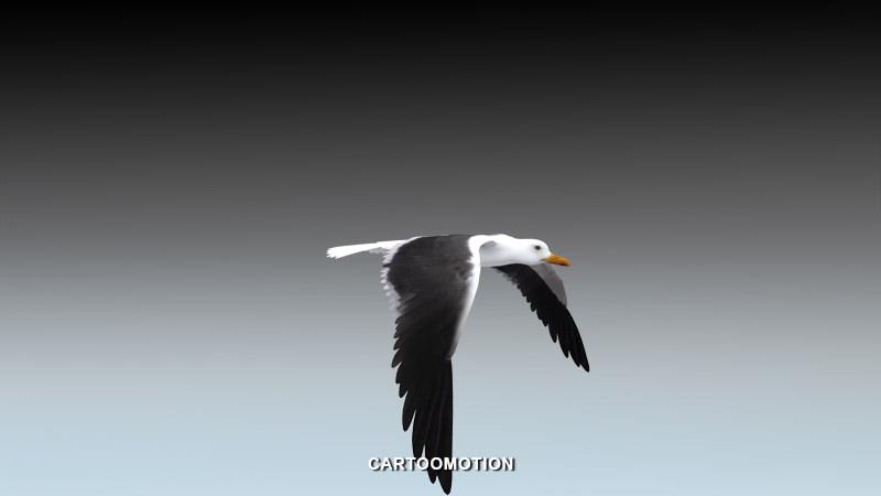 Seagull  - Animated