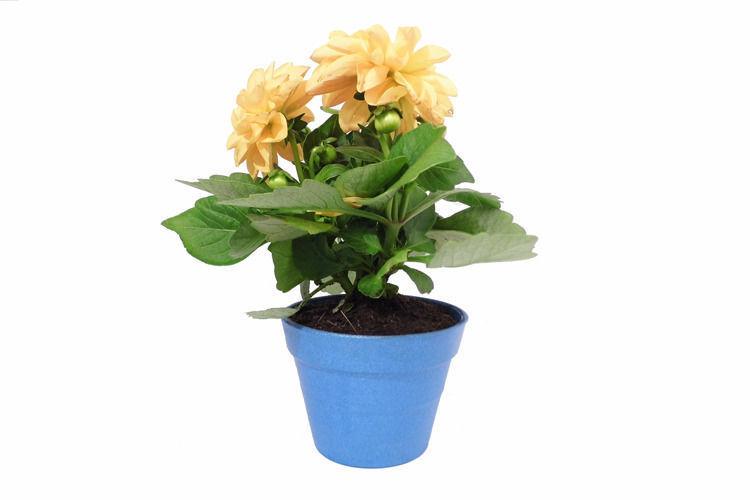 Small Plant Pot