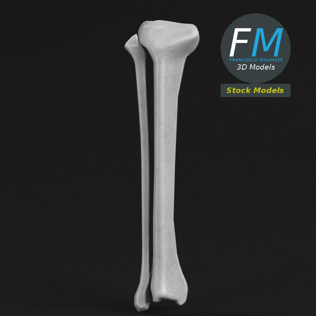 Anatomy - Tibia and Fibula